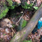 Infamous Suicide Forest